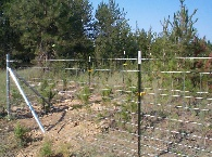 47 inch field fence with 1 wire in the middle and 1 Barbless wire on top